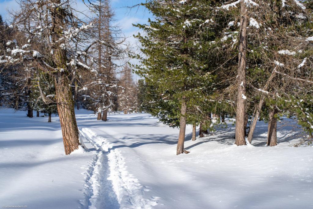Schneeschuhspur Morteratsch