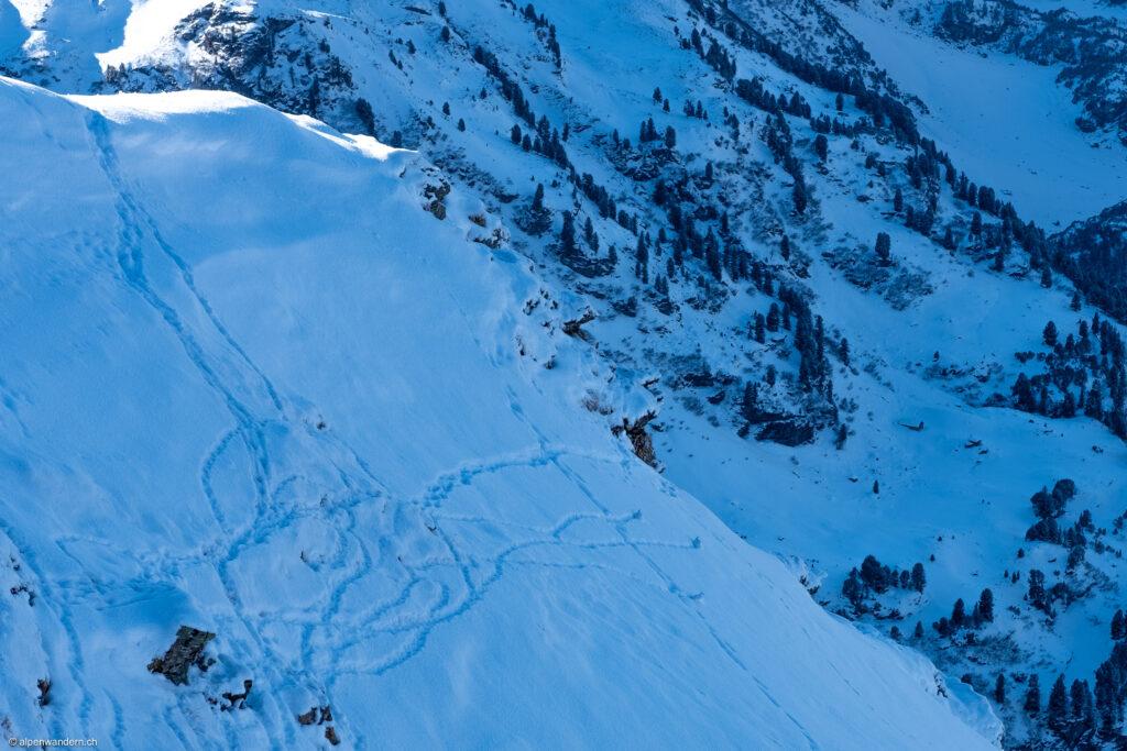 Schneehühner beim Pkt. 2285 vor dem Erdisgulmen