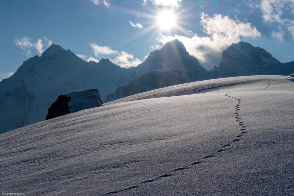 Tierspur im Schnee mit Cufercalhorn und Grauhörner